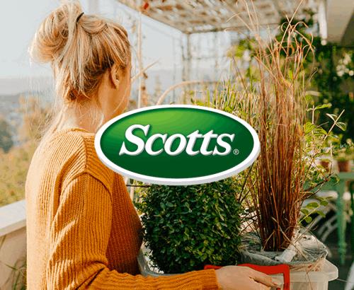Scotts - Website Design Toronto