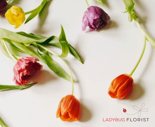 LadyBug Florist - Ecommerce Web Design in Toronto